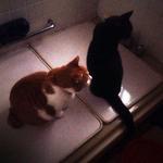 この日は猫の集会(2匹@浴室)に招待された